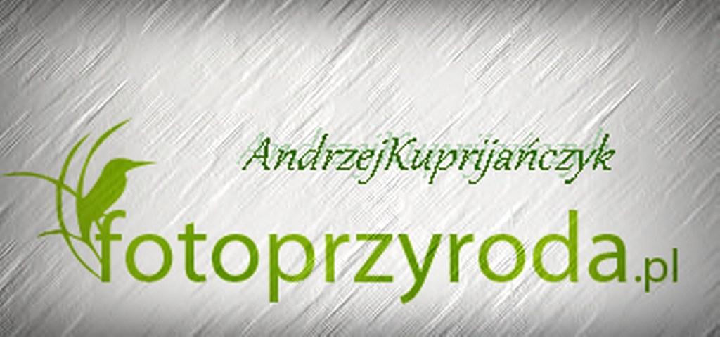 AndrzejKuprijańczyk